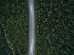 Road Dividing Trees