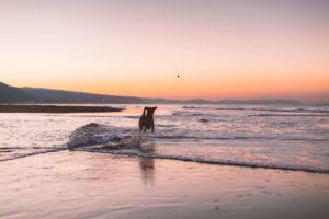 beach goal setting lifelaw2021 2 300x200 - Setting goals for a successful 2021